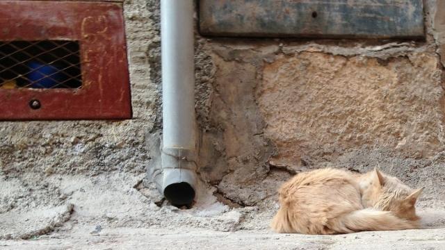 sleepycat (1)