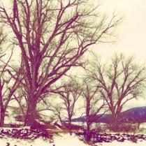 Image via http://woven-decor.com.
