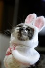 "Happy 2014! Take a moment to enjoy this photo of a cat dressed as a bunny that was inexplicably my first search result for ""Happy New Year."" (Photo by Takashi, CC BY-SA 2.0.)"