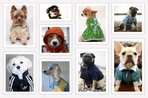 Dog rainwear designers and aficionados should also be sure to take advantage of Pinterest.