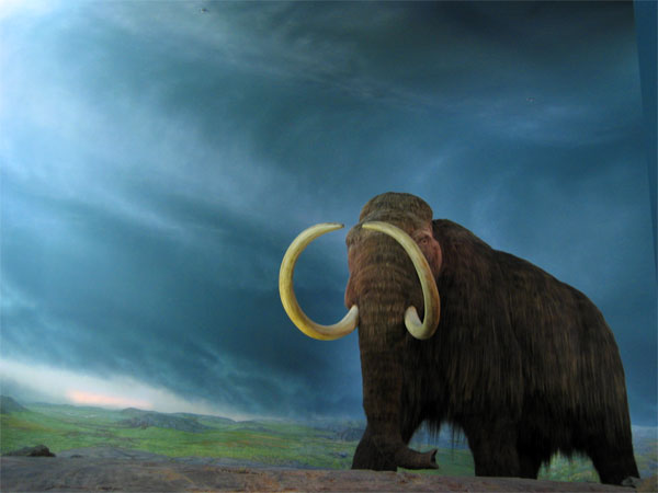 woolly mammoth time machine