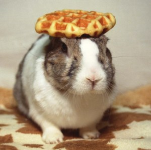 "I couldn't find an image for ""plug"" as good as the one in the other post, so here's Oolong the rabbit balancing a waffle on his head instead. (Oolong's Last Performance by tangotango, CC BY-SA 3.0.)"