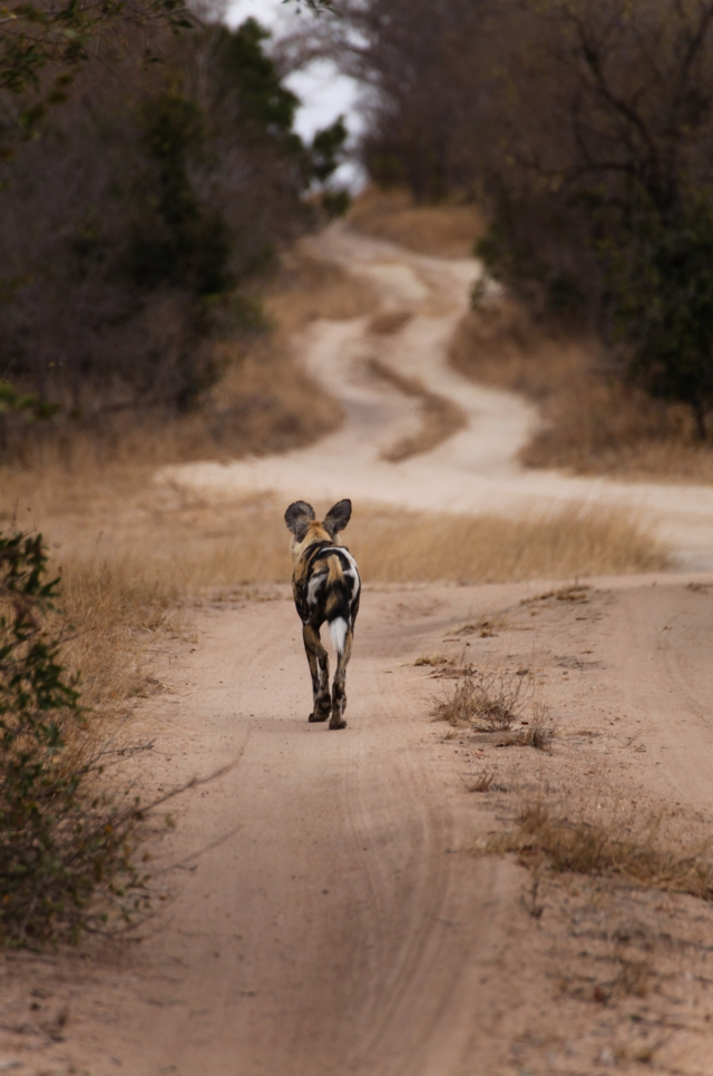 photo7wilddog