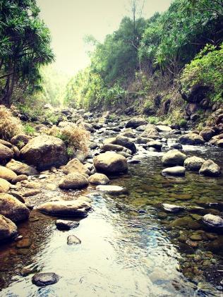 A lush jungle, away from civilization.