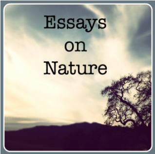 essays on nature widget