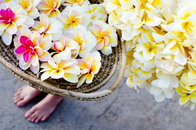 "Fresh: a photo of frangipani leis in Kauai, Hawaii, by <a href=""http://threebirds.blog"">Jen Hooks</a>."