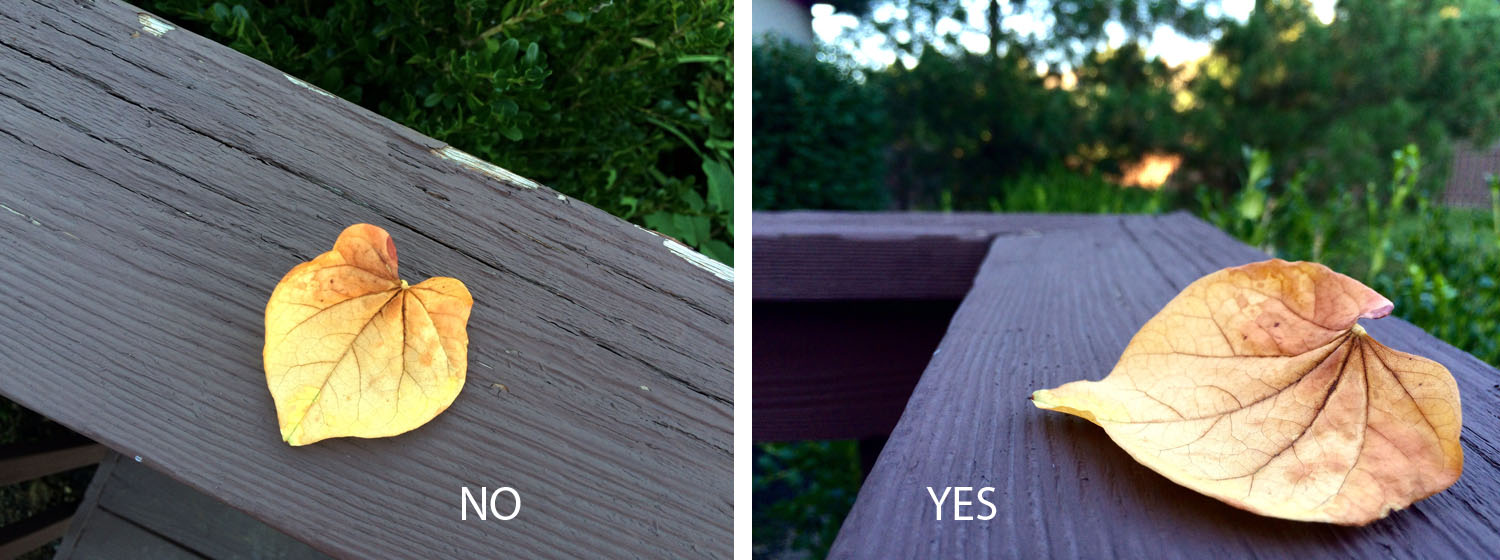 bad framing photography. Two Photos Of Leaves, One Using A Bland Composition, And More Bad Framing Photography
