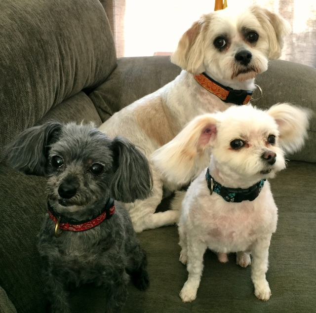 "Winner of ""best in show"" for awkward canine family photo, 2015. Photo by Krista"