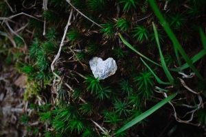 A small rock in the shape of a heart, laying in deep green vegetation. Photo by Photo by Jen Hooks.