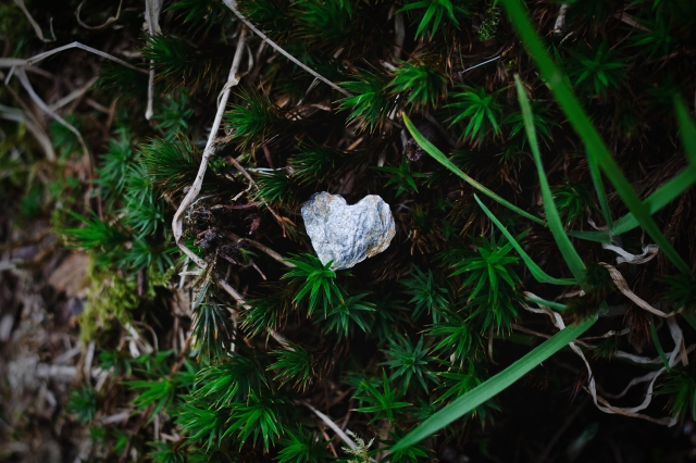 "A small rock in the shape of a heart, laying in deep green vegetation. Photo by Photo by <a href=""http://threebirds.blog"">Jen Hooks</a>."