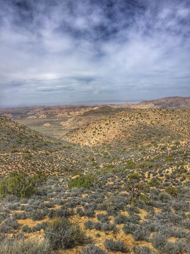 The view from Ryan Mountain in Joshua Tree National Park, California.