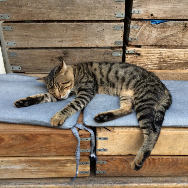 A street cat taking a nap on a pillowed bench
