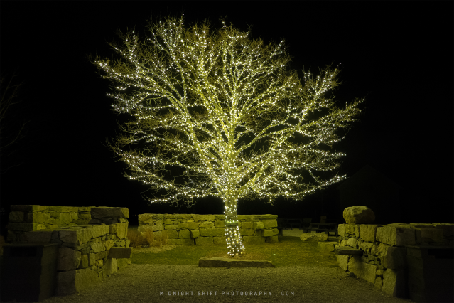 A tree covered in lights located in Westport, Massachusetts, United States.