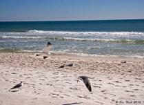 Seagulls flying along the shore